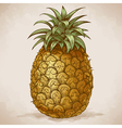 engraving pineapple retro style vector image
