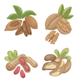 nuts2 vector image