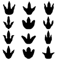 footprints of dinosaur vector image