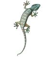 Tokay Gecko vector image