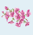 Sakura branch for greeting cards and greetings vector image