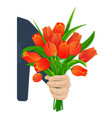 scarlet tulips in hand vector image