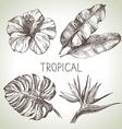 Hand drawn sketch tropical plants set vector image