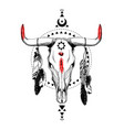 bull skulls with feathers and ethnic symbols vector image