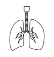 contour respiratory system with lungs vector image