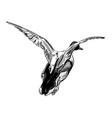 flying duck vector image
