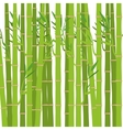 green bamboo plant vector image