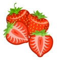 Strawberry whole and pieces vector image