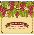Retro grapes harvest card vector image vector image