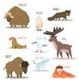 Arctic and Antarctic Animals Birds vector image