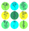 Medical Herbs Natural Medicine Icons Set vector image
