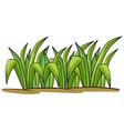 a grass vector image vector image