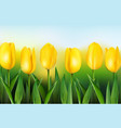 yellow tulips on background blue sky vector image