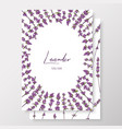 graphic detailed cards with lavenders linear vector image