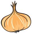 onion vector image vector image