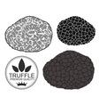 Truffle vector image