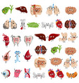 happy and sad organs cartoon characters vector image