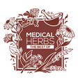 medical herbs flowers plants and leaves vector image vector image