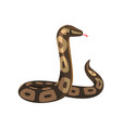 tropical python pythonidae with tongue out large vector image