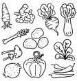 doodle vegetable various set vector image