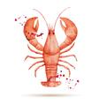 Watercolor lobster vector image