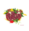 pomegranate with colorful splashes vector image