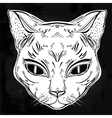 Black cat head portrait vector image