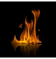 Yellow Orange Fire Flame Bonfire on Background vector image