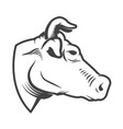 cow head icon isolated on white background design vector image vector image