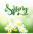 spring time on background with spring flowers vector image