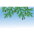 spruce branches vector image