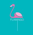 flamingo bird sign vector image