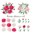 Flowers and Leaves Pink and White Peonies Floral vector image