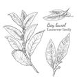 Ink bay laurel hand drawn sketch vector image