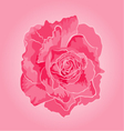 Rose pink symbol of love vector image