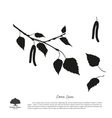 Black silhouette of birch branch vector image