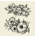 Flower Hand drawn sketch bindweed tutsan vector image