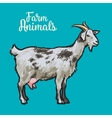 ketch of a goat with horns and udder vector image