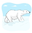 big polar bear in arctic tundra vector image
