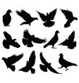 flying dove silhouettes isolated pigeons vector image