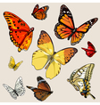 set of different butterflies in flight vector image