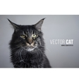 photorealistic cat Maine coon Stern look vector image