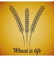 wheat ears on yellow vector image