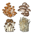 Set of shimeji oyster enokitake and king trumpet vector image
