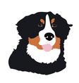 Bernese Mountain Dog vector image