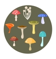 Different types of mushrooms set vector image
