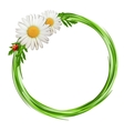Grass frame with daisy flowers and ladybug vector image