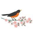 robin bird vector image