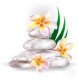 Spa Orchid Design vector image