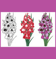 bouquet of flowers gladiolus vector image